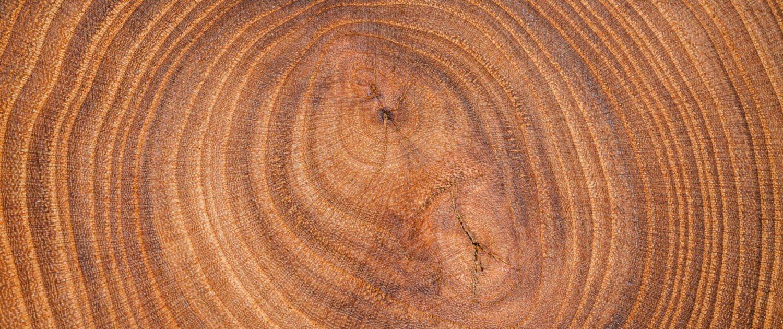 Quelle essence de bois