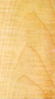 Erable sycomore