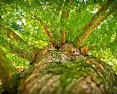 valorisation du bois