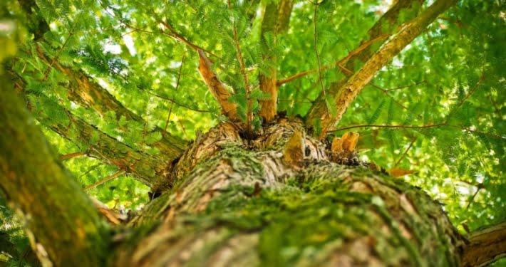 renouvellement forestier