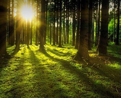 peut-on aller couper du bois en forêt