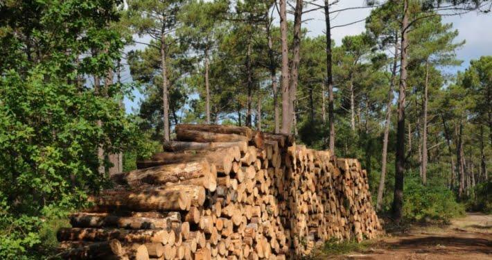 Filière du bois en France
